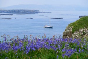 2. St Hilda Treshnish Islands