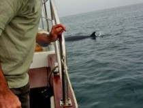 Minke Whale sighting