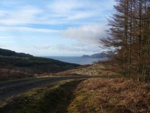 Forest track Ardmore Walk